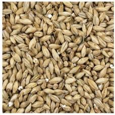BSG RAHR White Wheat 55 L